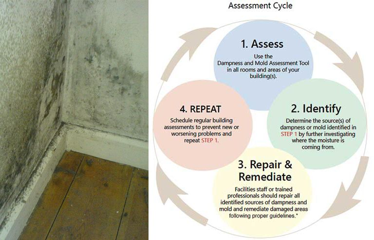 Mold Assessment Tool For Employers Released By NIOSH