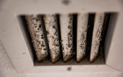 3 Ways to Keep Your Team Safe From Workplace Mold