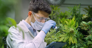 Cannabis industry OSHA regulation