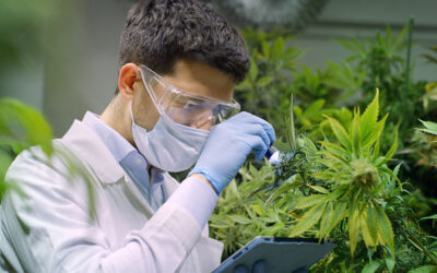 What to Know About OSHA Regulations in the Cannabis Industry